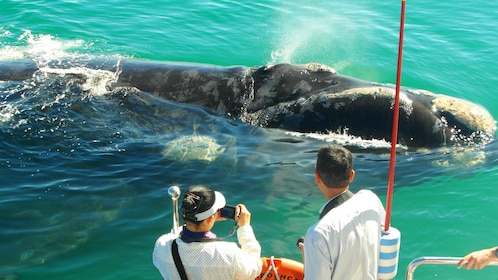 Whale surfaces next to people on a boat