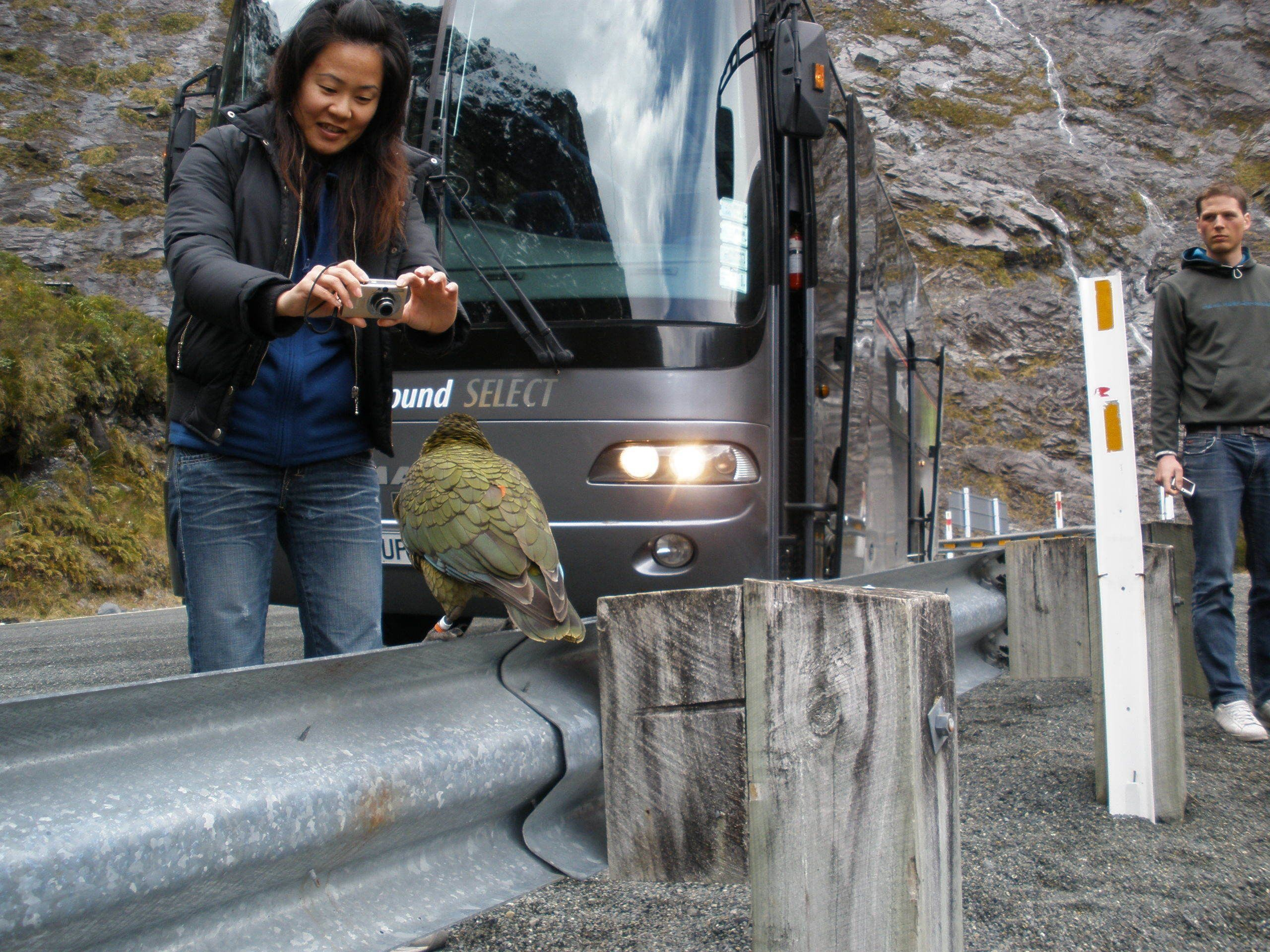 Luxury Small Coach to Milford & Nature Milford Sound Cruise