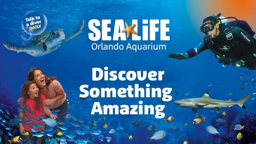 Show item 3 of 9. SEA LIFE Orlando Aquarium