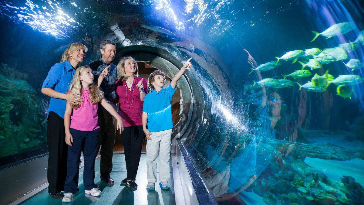 Aquarium tunnel with family at Sea Life in Orlando