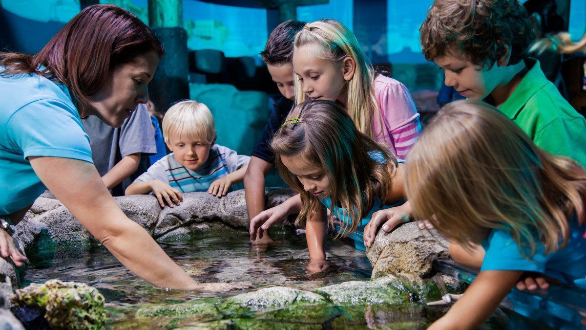 Marine touch tank with a group of children at Sea Life in Orlando