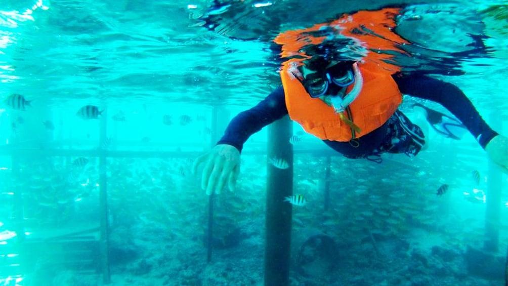 Show item 1 of 5. Guest snorkeling in Cebu
