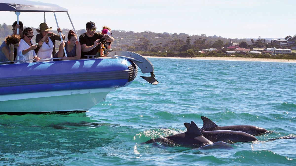 Victor Harbour Seal Island Tour