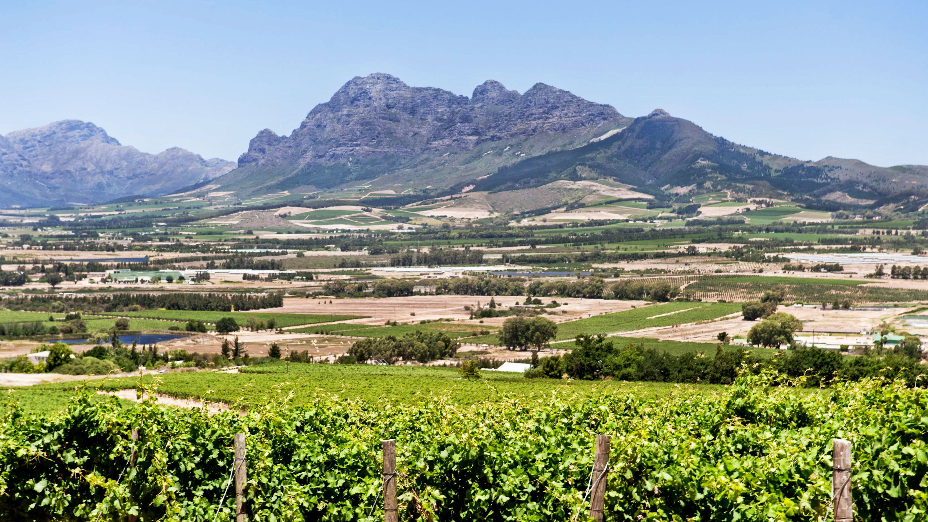 View of vineyards in Cape Town