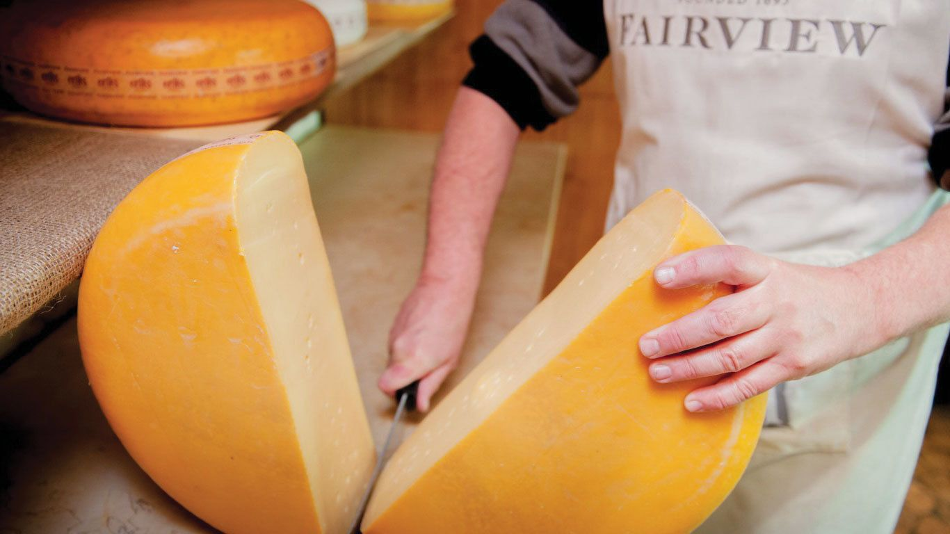 Winery staff member slicing large wheel of cheese in Cape Town
