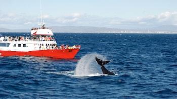 Faxa Bay Whale-Watching Cruise