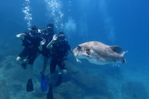 Discover Scuba Guided Introduction Dives