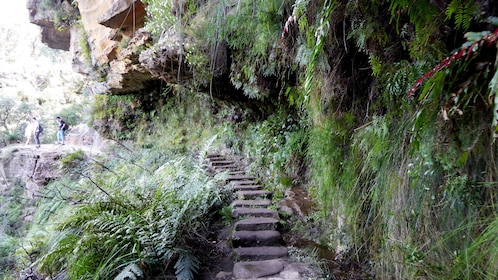 Hiking trail in the blue mountains