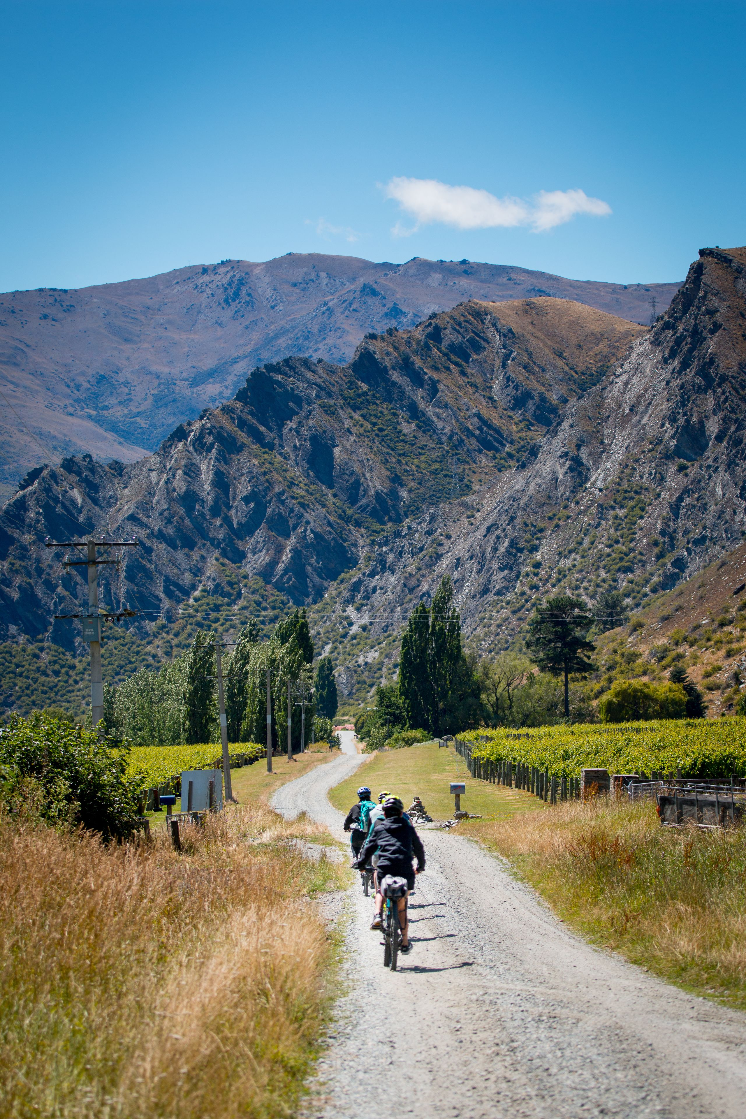 Queenstown Winery Cycle Tour with Tastings & Lunch