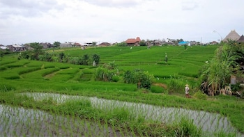 Bali Small Group Hiking Tour – Rice Terraces Trek