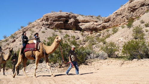 guide leading camel riding group through the hills in Las Vegas
