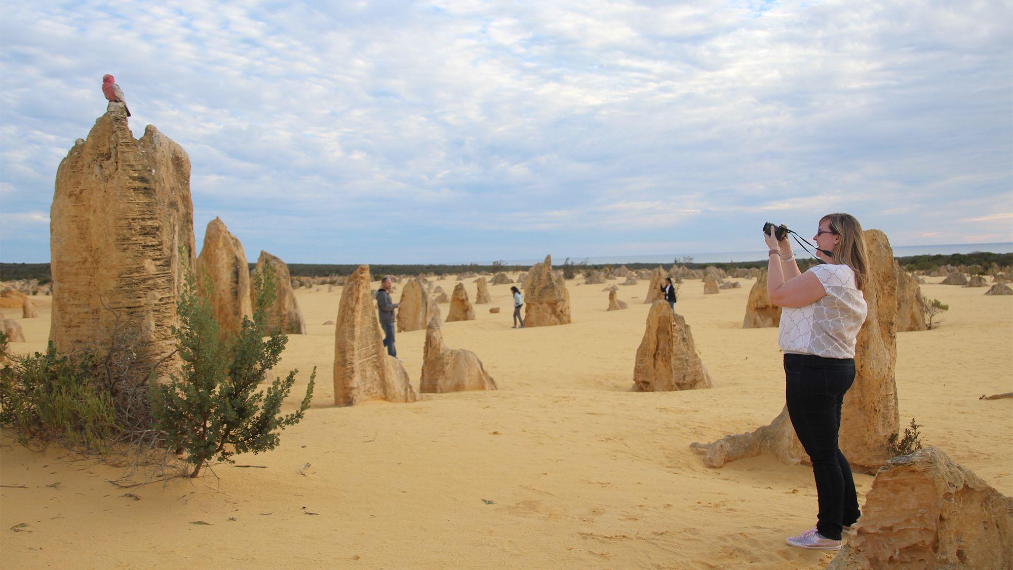Woman taking photos on the Pinnacles & Sandboarding Tour in Perth