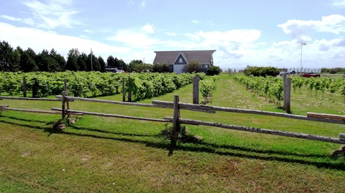 Lighthouse and Winery Tour in Charlottetown