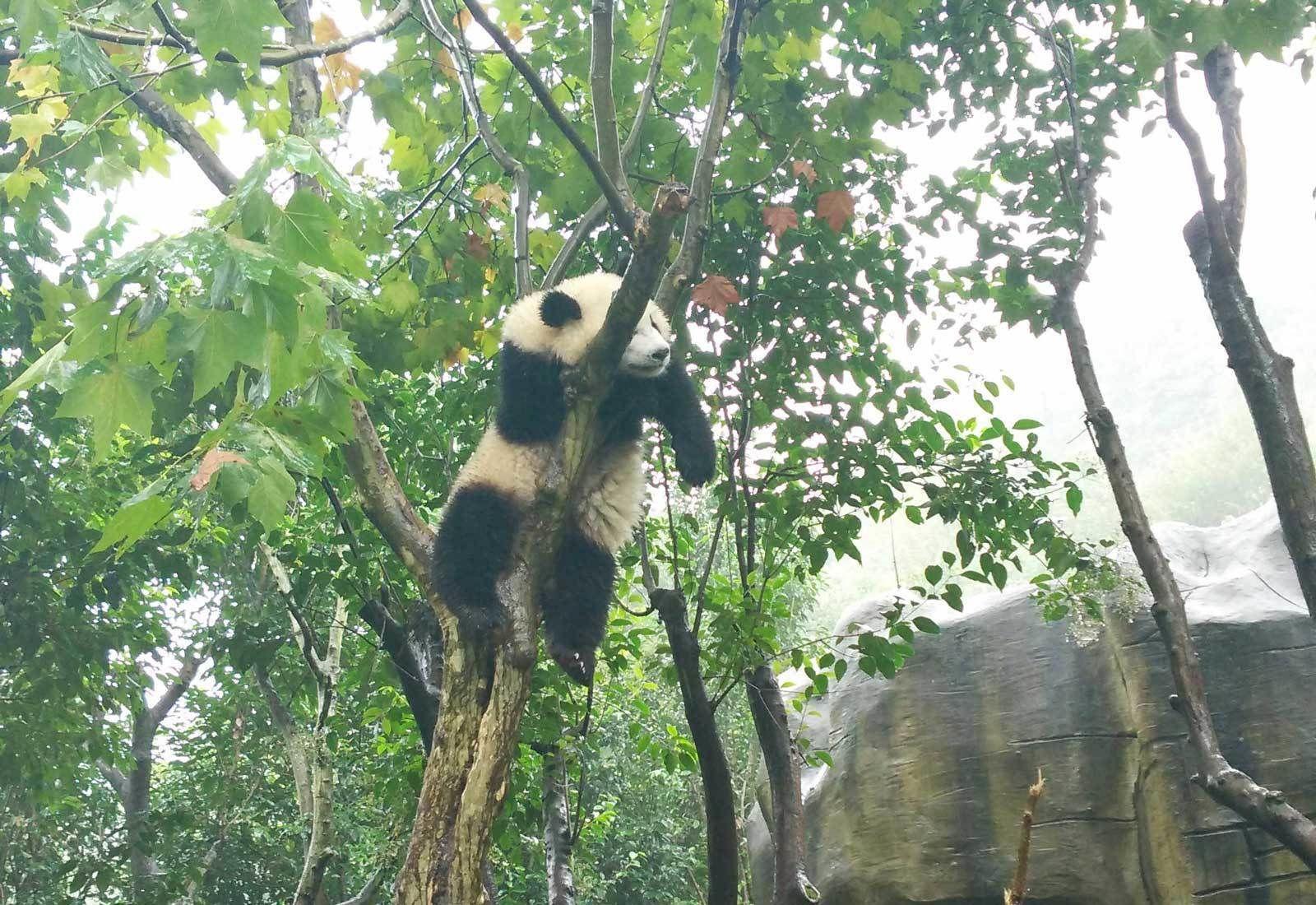 Best-Panda-Photo-(3).jpg