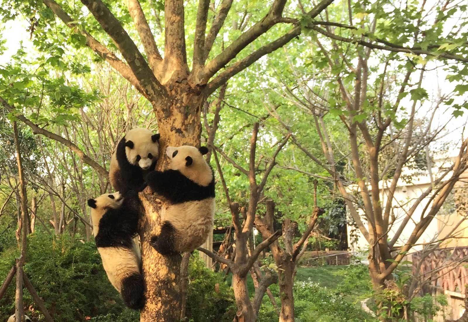 Best-Panda-Photo-(2).jpg