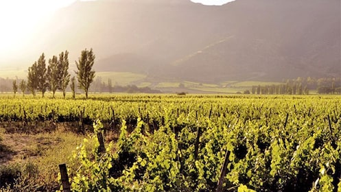 View of a winery in Maipo Valley
