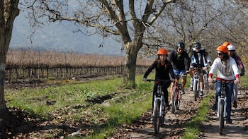 Private TerraMater Vineyard & Biking Tour with Lunch