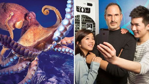 Split image showing large octopus at Sea Life and a Steve Jobs wax figure at Madame Tussauds in Orlando