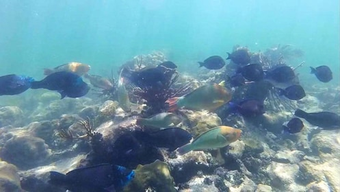 Large school of fish swimming among coral in Key West