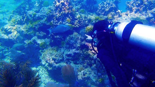 Scuba diver swimming near fish around coral reef in Key West