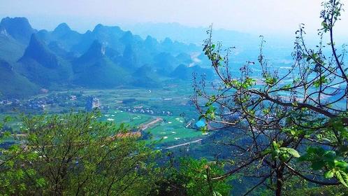 Yaoshan Tea Plantation