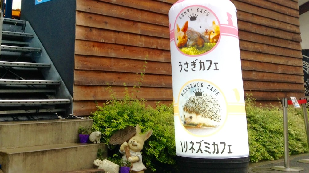 Outside the Hedgehog petting building