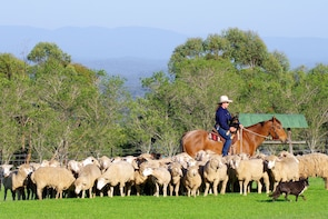 Australian Outback Sheep Farm