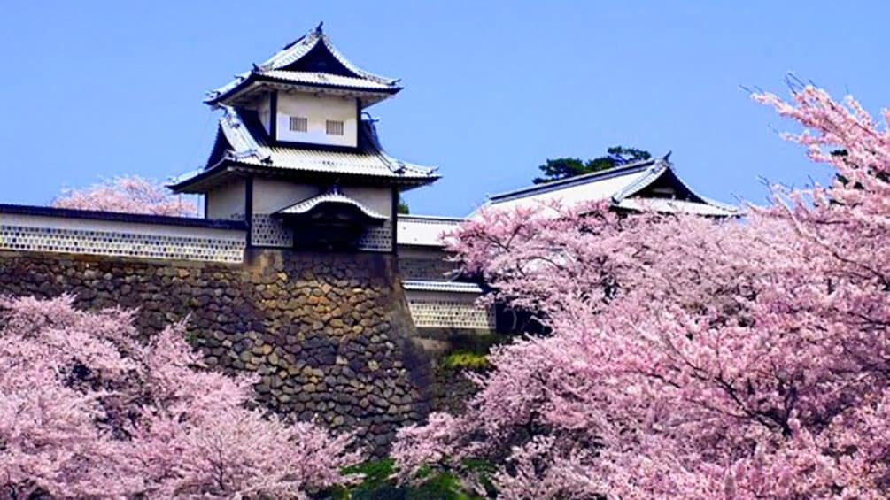 Show item 4 of 8. Cherry blossoms next to building in Kanazawa
