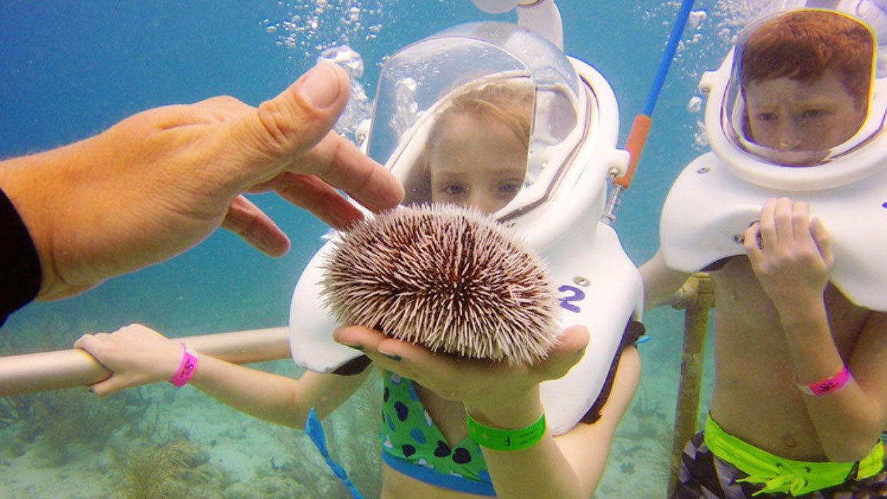 Sea Trek at Coral World Ocean Park