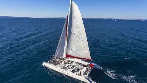 Ariel view of catamaran at full sail around Taboga Island