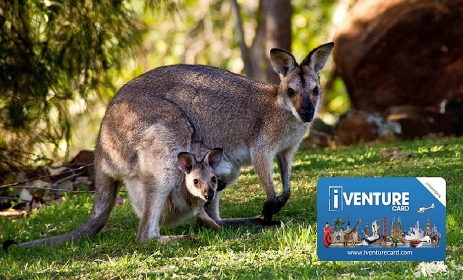 Foto 1 von 10 laden The Ultimate Australia Pass