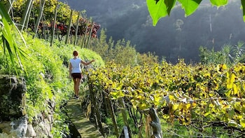 Full-Day Madeira Wine Tour with Lunch