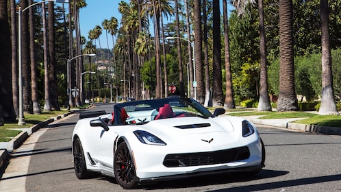 Corvette convertible on palm tree lined street in Beverly Hills