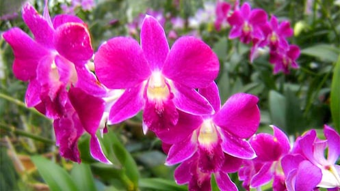 A Tropical flower