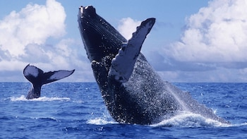 Whale-Watching Adventure
