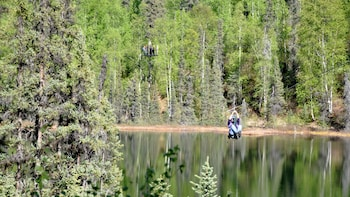Denali Zipline Tours - Talkeetna, Alaska