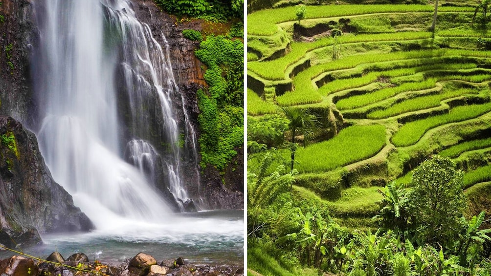 Show item 1 of 10. Combo image of the Blangsinga Falls and Antungan Village Rice Fields in Bali
