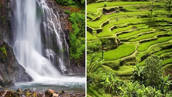 Bali Rice Field Trekking & Waterfall Private Tour with Lunch