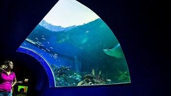 Tour de todo un día con visita al acuario, el Museo de Ripley y el Museo de...