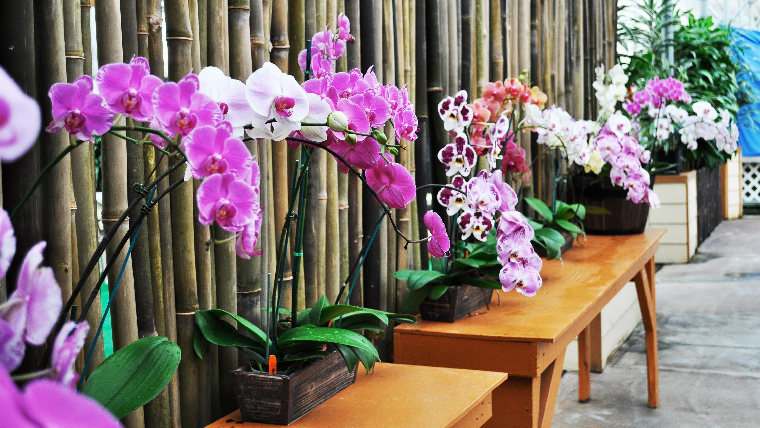 Orchid Maze Experience Tour & Tasting in Hawaii
