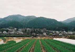 Nature Experience in Ohara with Organic Lunch Course
