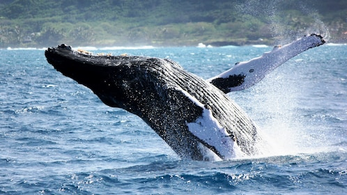 North Shore Whale Watch in Oahu