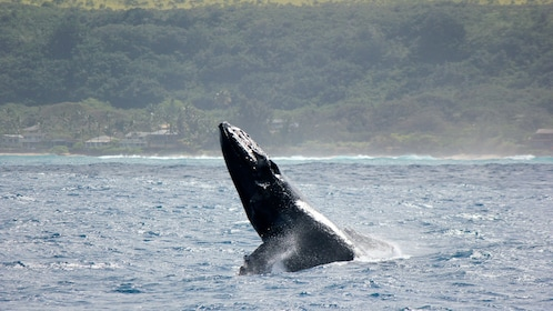 Oahu North Shore Whale Watch
