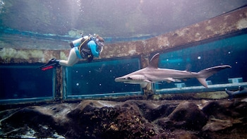 Scuba Dive with Sharks at Sea Life Park