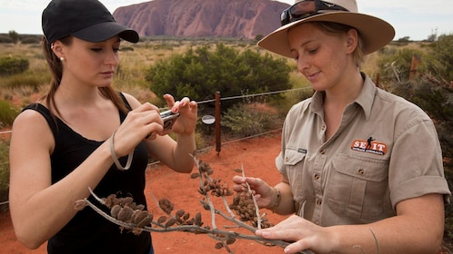 Tour guide holds up branch for tourist to take picture of at Uluru