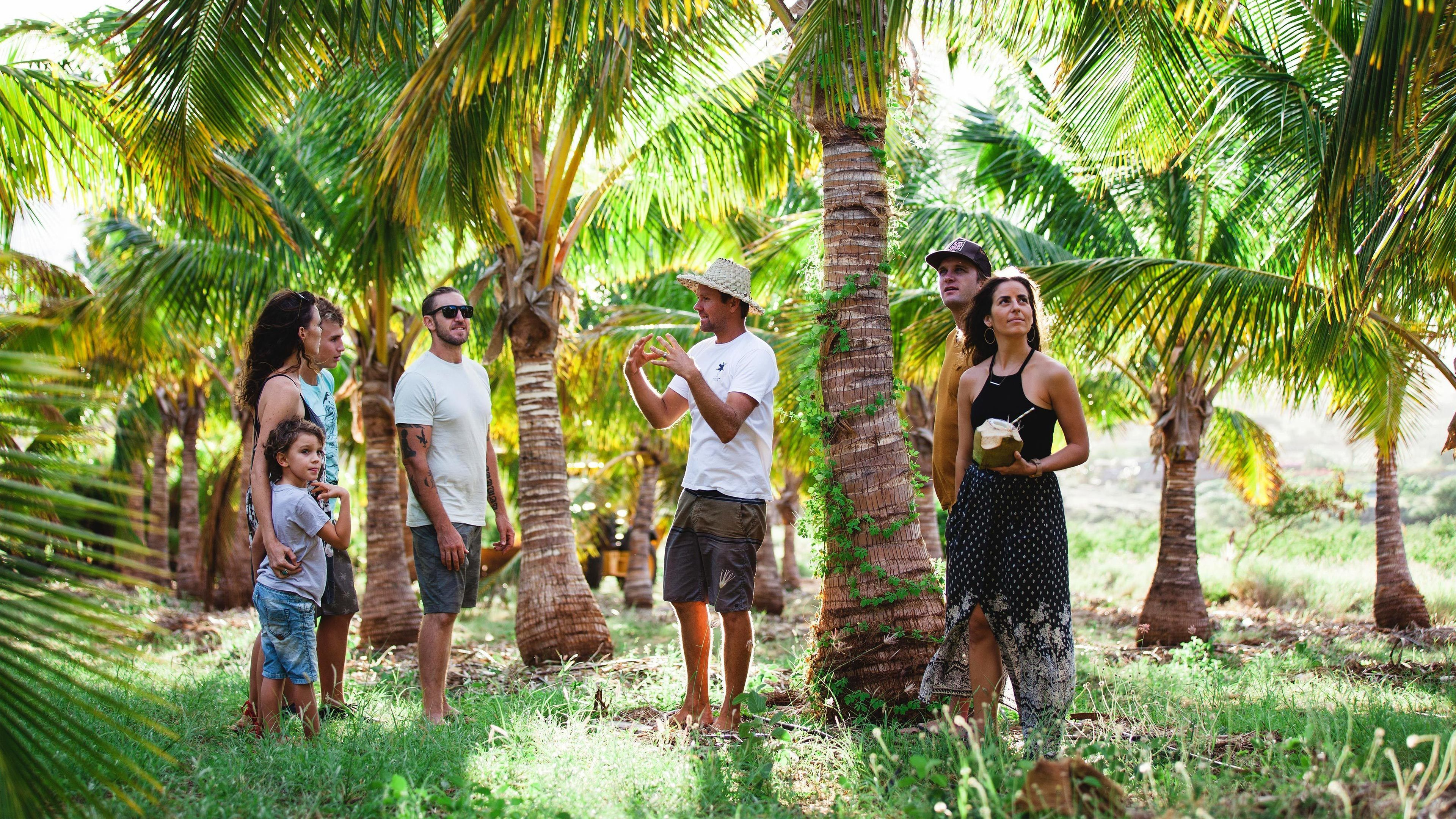 Tour group with guide on a coconut farm on Maui