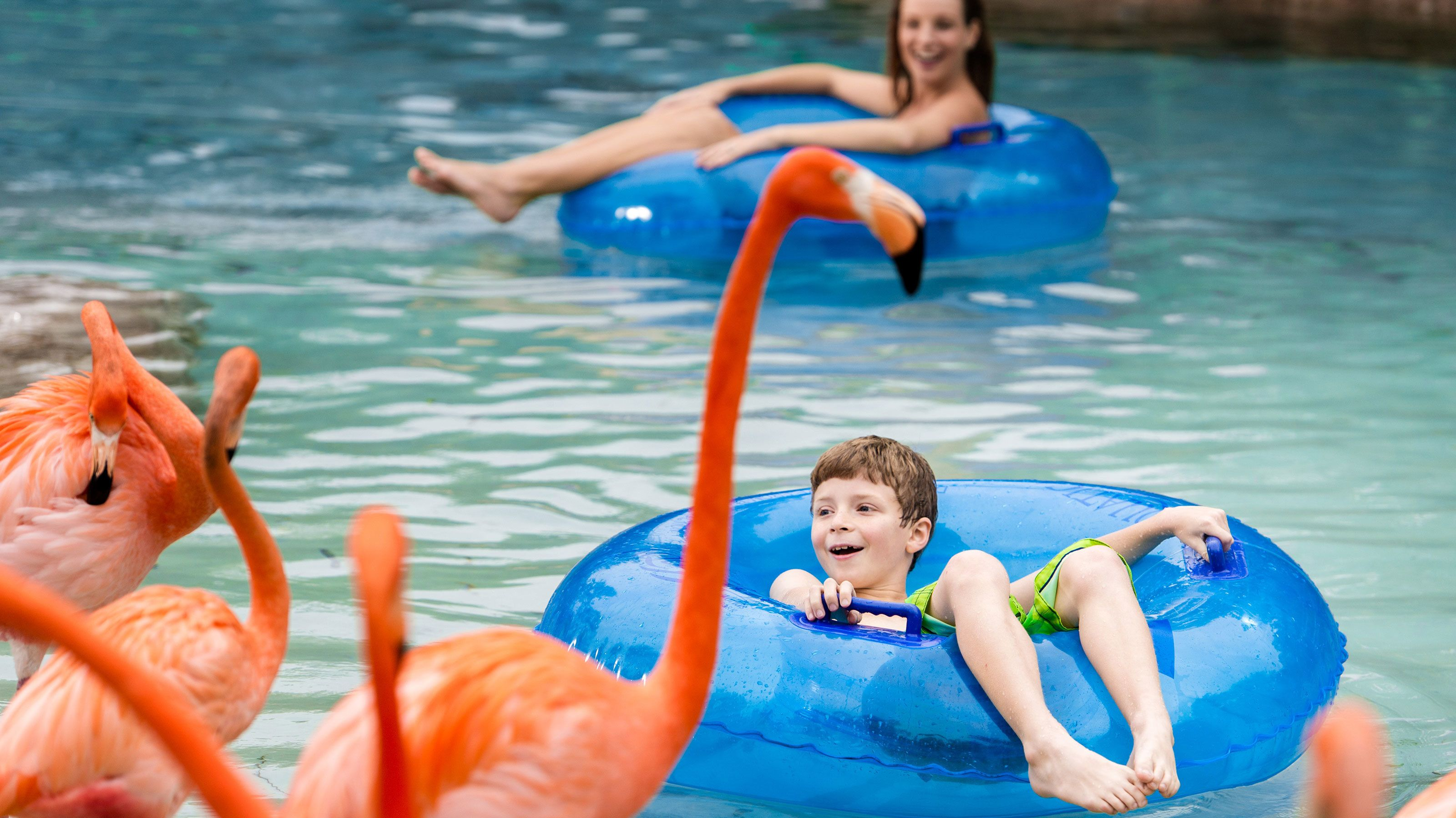 People float down river in inflatable tube while looking at flamingos at SeaWorld San Diego