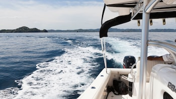 Private Whale-Watching & Dolphin Cruise