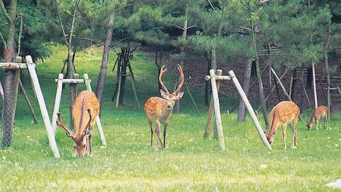 Nara Park view in Japan
