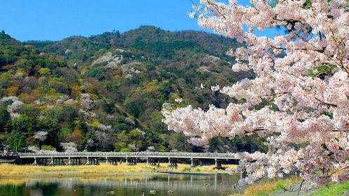 Day view of Arashiyama in Japan